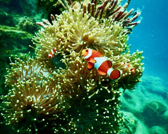 Nanotechnology from Nambour decreases Reef threat